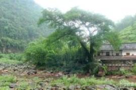四川画稿溪国家级自然保护区